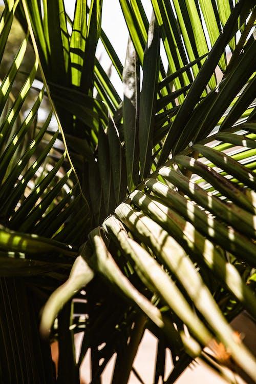 Fotobanka sbezplatnými fotkami na tému exotický, exteriéry, farba, leto
