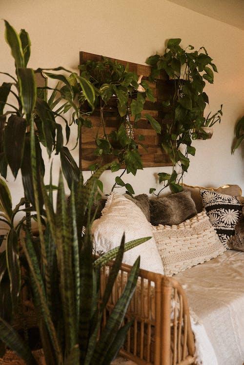 Foto d'estoc gratuïta de cànem de corder de vímet, disseny, disseny d'interiors, fulles