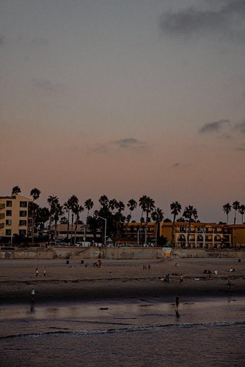 Photos gratuites de arbres, aube, bâtiments, bord de mer