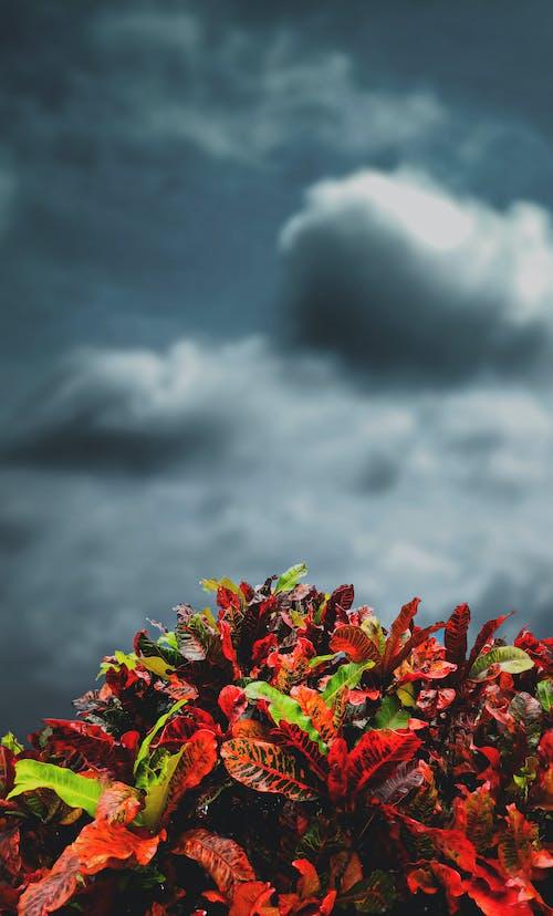 Kostnadsfri bild av blad, regnmoln