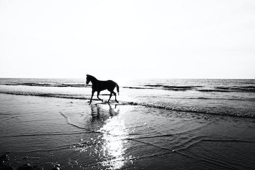 Foto profissional grátis de água, animal, ao ar livre, areia