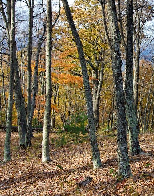 คลังภาพถ่ายฟรี ของ ตก, ภูมิทัศน์ที่สวยงาม, ภูเขา, สี
