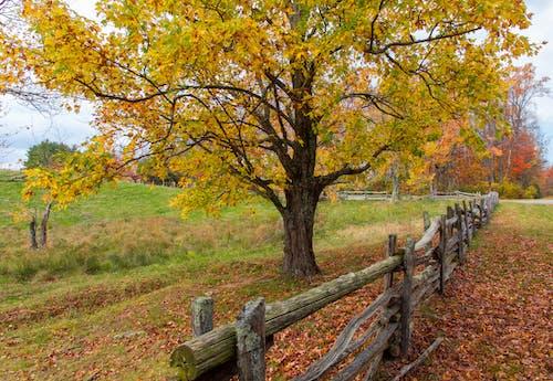 คลังภาพถ่ายฟรี ของ ตก, ต้นไม้, ภูมิทัศน์, สีเหลือง