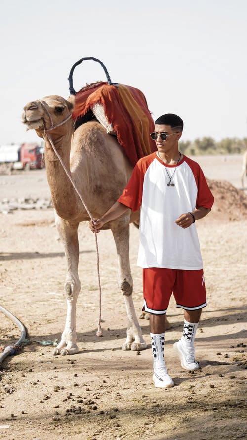 Man in White and Red T-shirt and Red Shorts Walking Beside Brown Camel