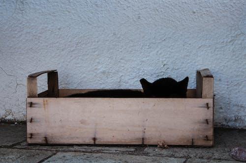 고양이, 그리스, 박스, 상자의 무료 스톡 사진