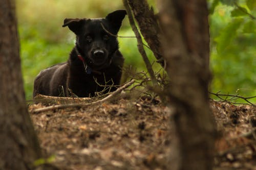 검은 개, 바르샤바, 숲의 무료 스톡 사진