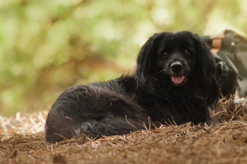 Free stock photo of black dog, forest, warsaw