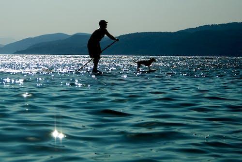 Free stock photo of blue sea, dog, greece, summer