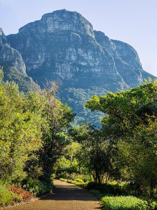 Kostenloses Stock Foto zu aussicht, baum, bäume, berg