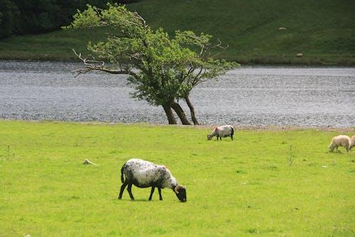 Free stock photo of ireland