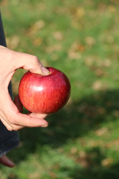 Free stock photo of apple, massachusetts