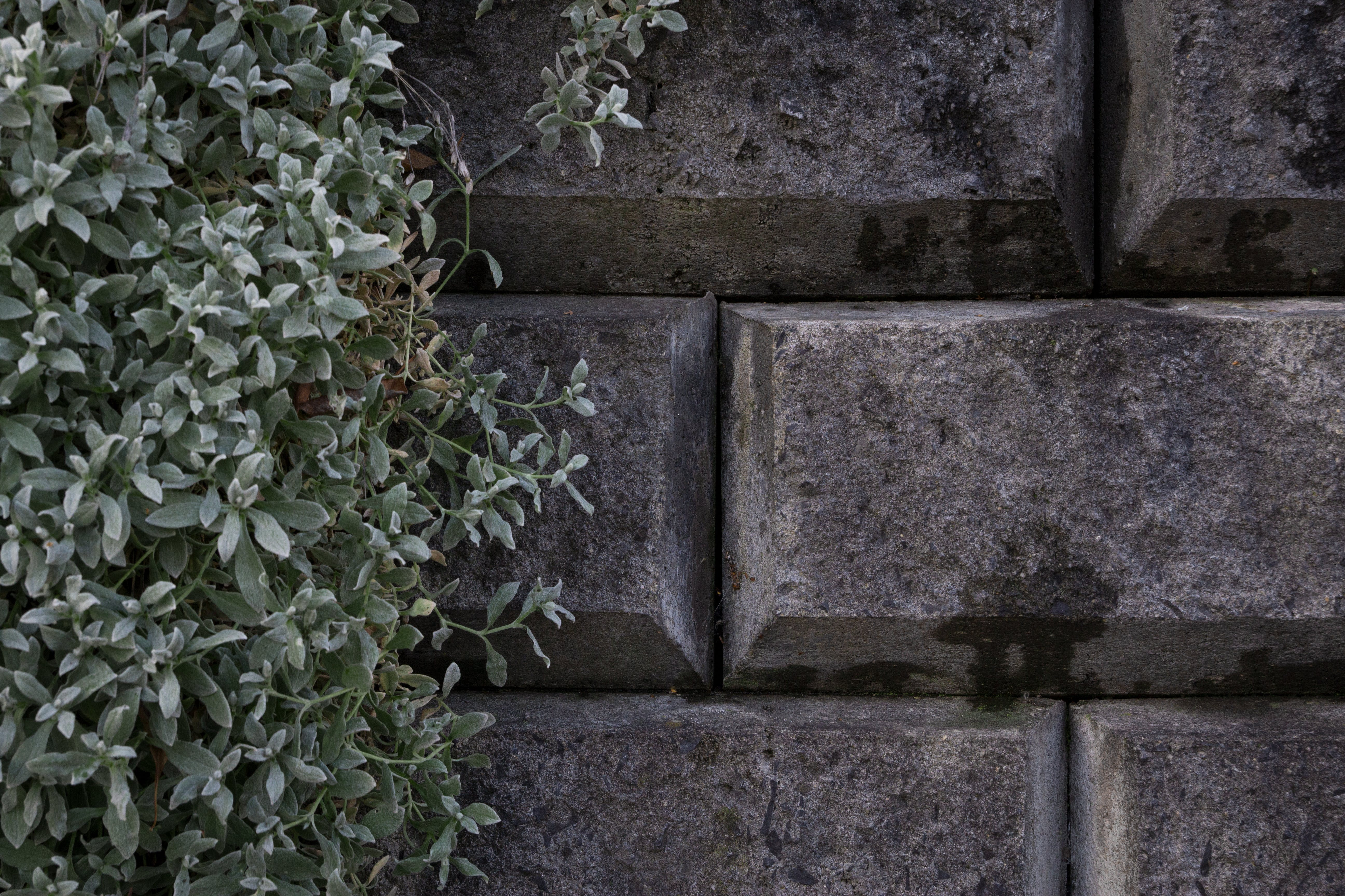 Free stock photo of nature, grey, stone wall, grey concrete
