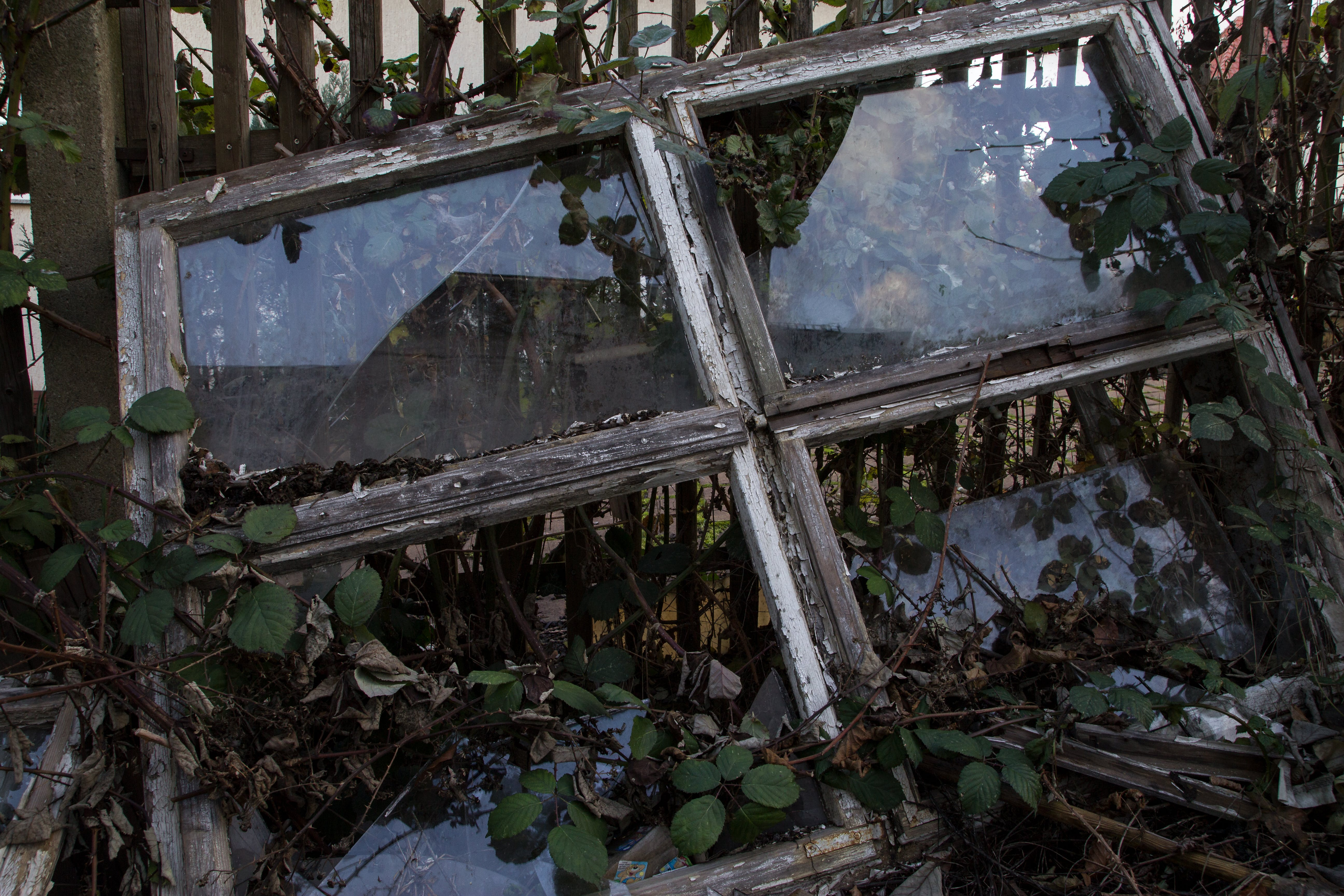 Free stock photo of nature, window, old, wild