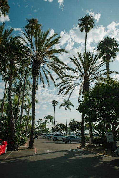 Immagine gratuita di alberi, alberi di cocco, all'aperto, ambiente