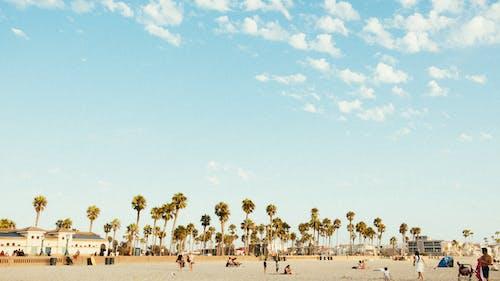 Fotobanka sbezplatnými fotkami na tému deň, denný čas, exteriér, kokosové palmy