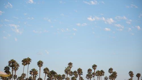Darmowe zdjęcie z galerii z błękitne niebo, drzewa, drzewa kokosowe, palmy