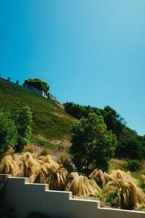 Immagine gratuita di alberi, ambiente, campo, cielo