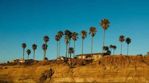 Foto stok gratis alam, di luar rumah, Fajar, fotografi sudut rendah