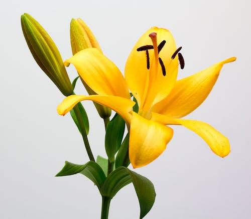 Бесплатное стоковое фото с желтый, красивый, лепестки, листья