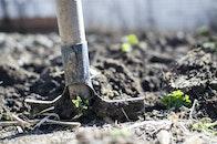 garden, agriculture, farm