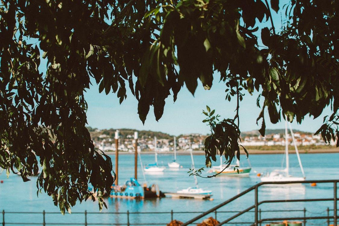 árbol, barcos, concentrarse
