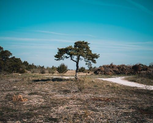 Imagine de stoc gratuită din arbori, fotografie, în aer liber, peisaj