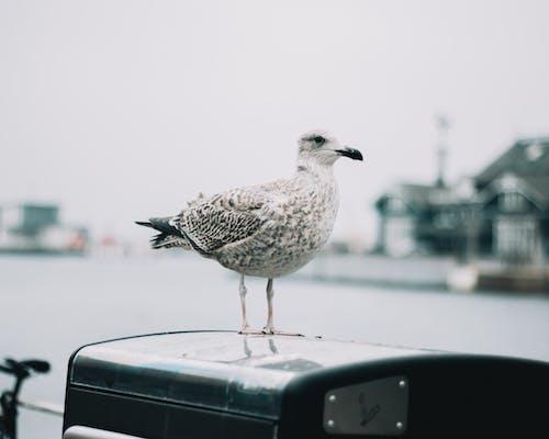 動物, 動物攝影, 喙, 專注 的 免費圖庫相片