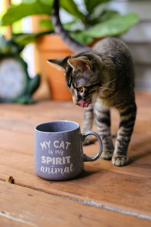 Free stock photo of cat, kitten, spirit