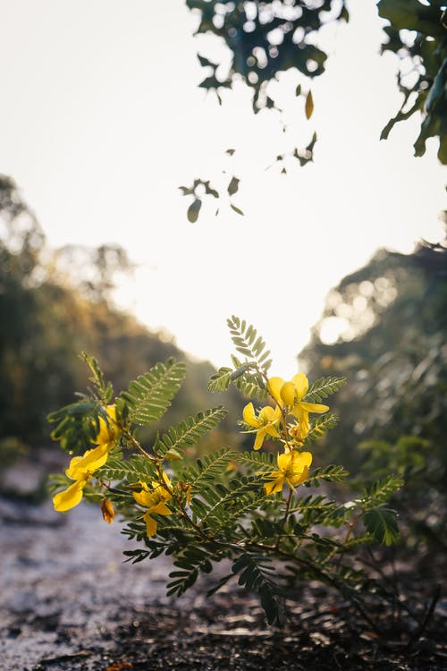Free stock photo of nature, yellow flower