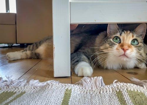 Ảnh lưu trữ miễn phí về bàn chân, chú mèo dễ thương, con mèo, con vật