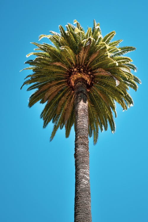 Foto Ad Angolo Basso Di Palm Tree