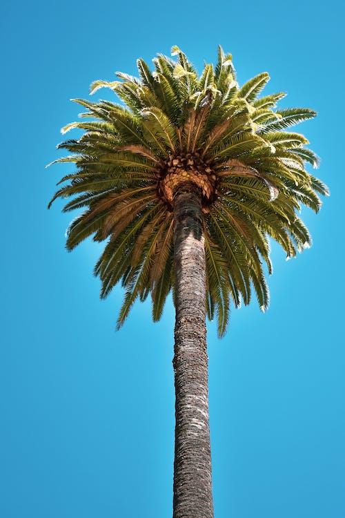 δέντρο, δέντρο καρύδας, κορμός δέντρου