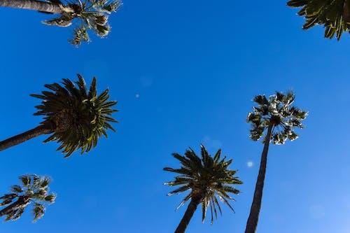 6, 배경, 야자나무, 야자수의 무료 스톡 사진