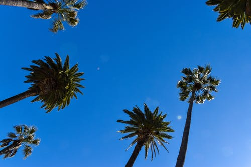 Gratis stockfoto met achtergrond, blauwe lucht, bomen, Californië