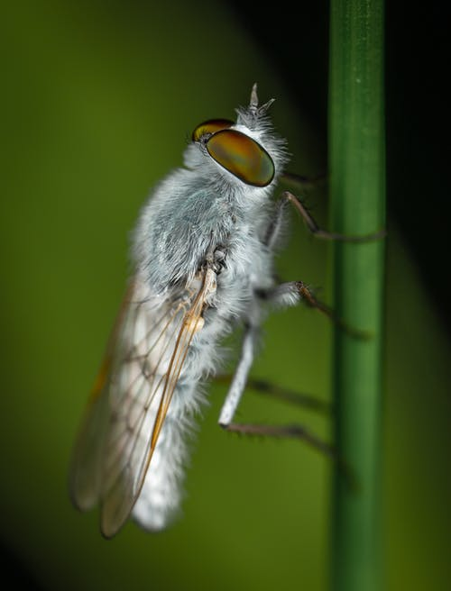 Grey and White Winged Insect