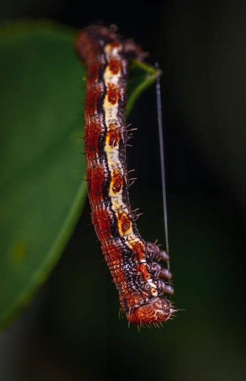 cận cảnh, chụp ảnh côn trùng, côn trùng