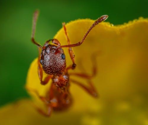 Macro Photography of Ant