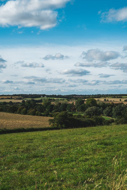 ağaçlar, alan, ara, arazi içeren Ücretsiz stok fotoğraf