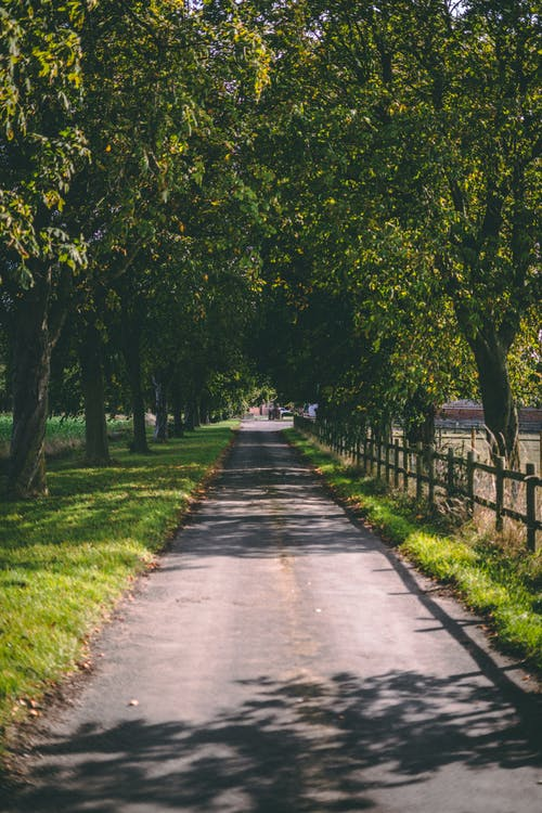 Free stock photo of british countryside, country, countryside, driveway