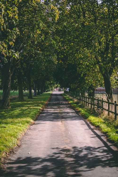 Бесплатное стоковое фото с англия, англия сельской местности, британская сельская местность, деревья