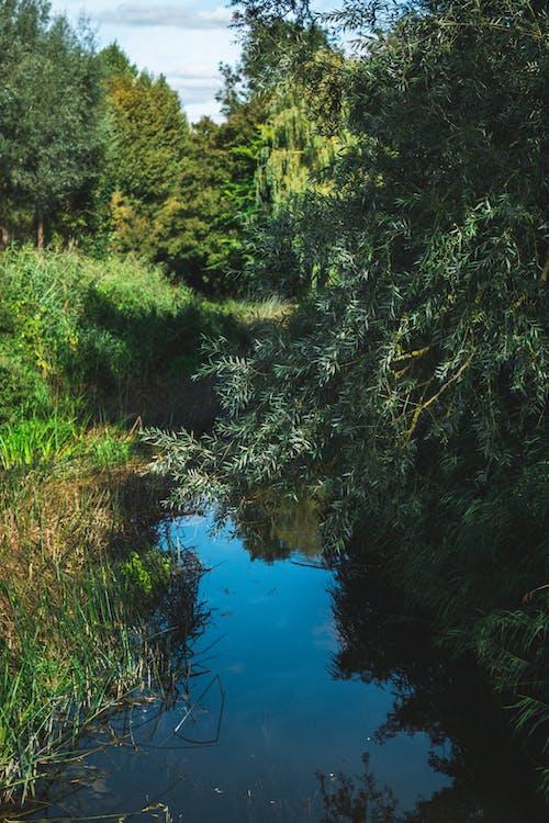 Бесплатное стоковое фото с англия, англия сельской местности, британская сельская местность, вода