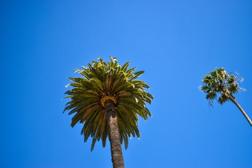Free stock photo of background, blue sky, california, coconut