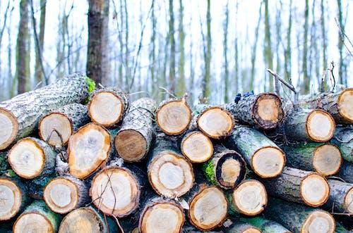 Immagine gratuita di abbaiare, alberi, ambiente, corteccia di albero