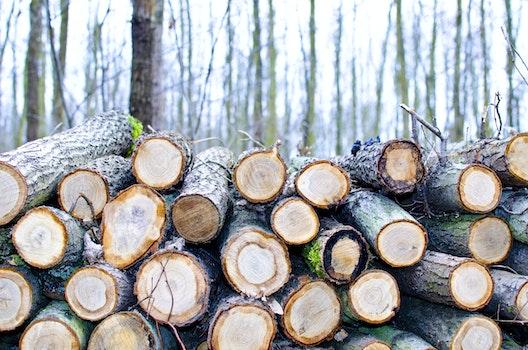 Free stock photo of wood, landscape, nature, trunks
