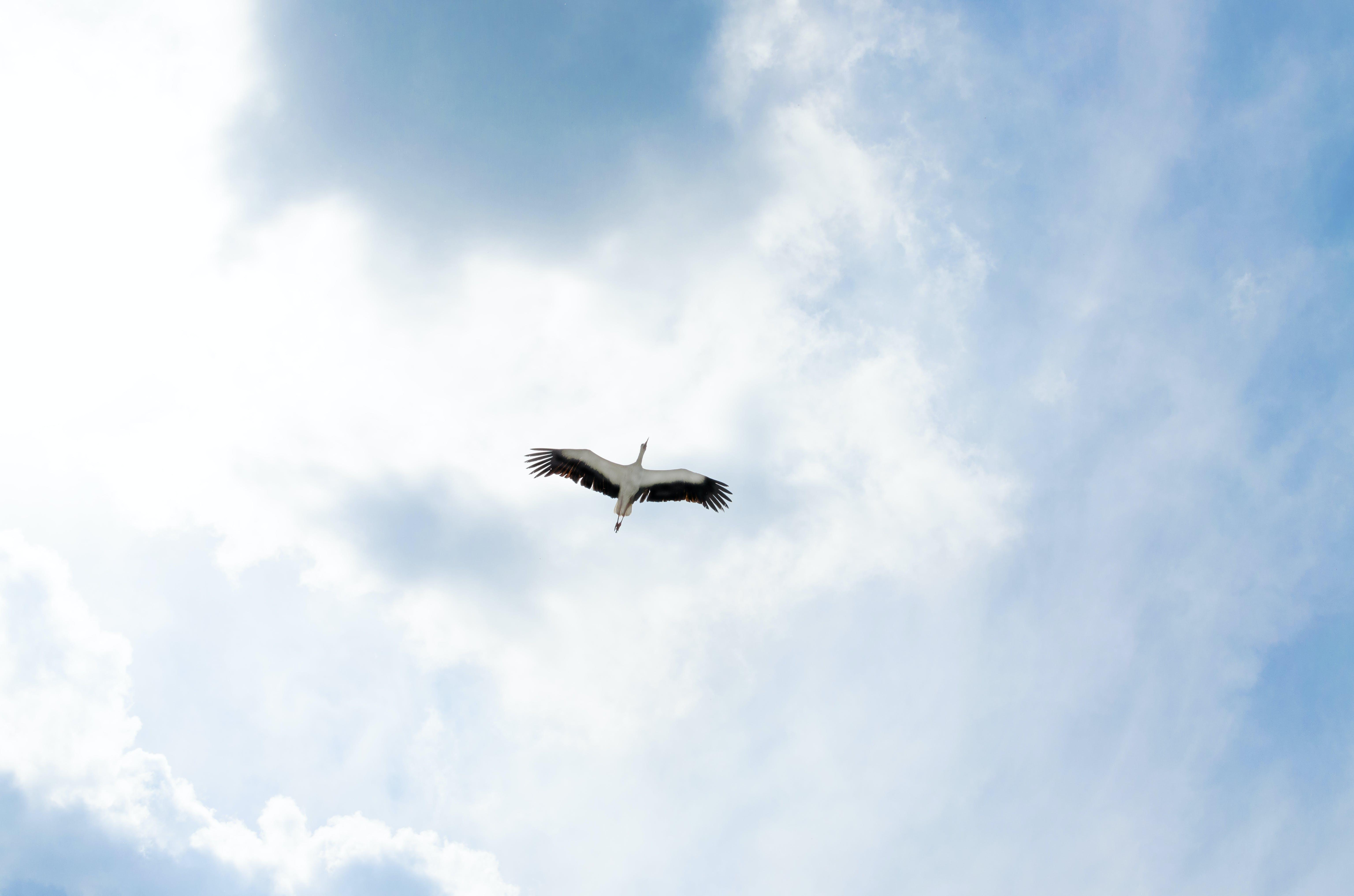 Heron Flying Beneath Sky