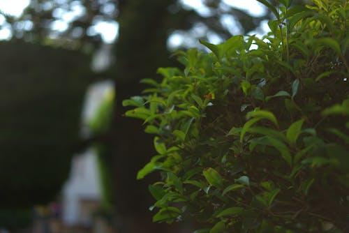 Immagine gratuita di bokeh, foglie, impianti, verde