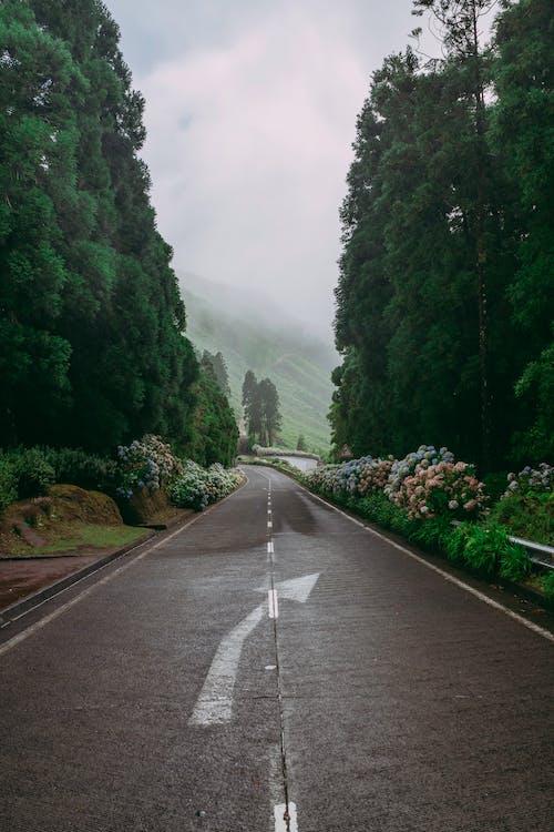 Δωρεάν στοκ φωτογραφιών με αδειάζω, άδειο δρόμο, Αζόρες, απόσταση
