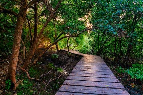 Бесплатное стоковое фото с деревья, заводы, окружающая среда, тропинка