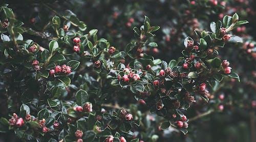 Fotos de stock gratuitas de arbusto, flores, follaje, hojas