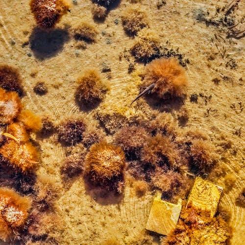 balık, deniz, deniz kıyısı, deniz yatağı içeren Ücretsiz stok fotoğraf